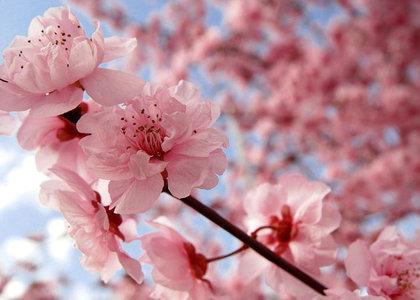 david-cieslak-spring-homebuying-season-staging-tips-signature-staging