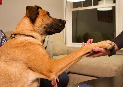 pet-friendly-rental-listings-otis-nar-spokesdog