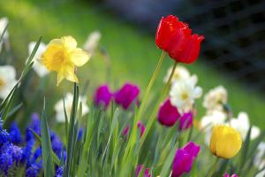 Spring-Chicago-Grow-Real_Estate