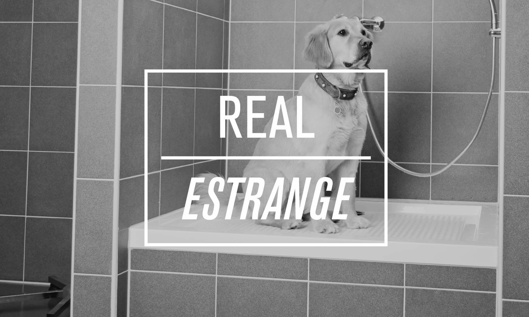 REAL-dogfinal